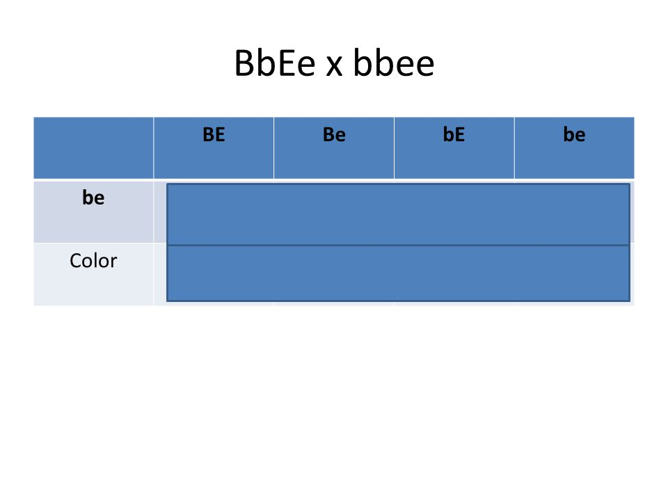 BbEe x bbee BE Be bE be BbEe Bbee bbEe bbee Color Black Yellow Brown
