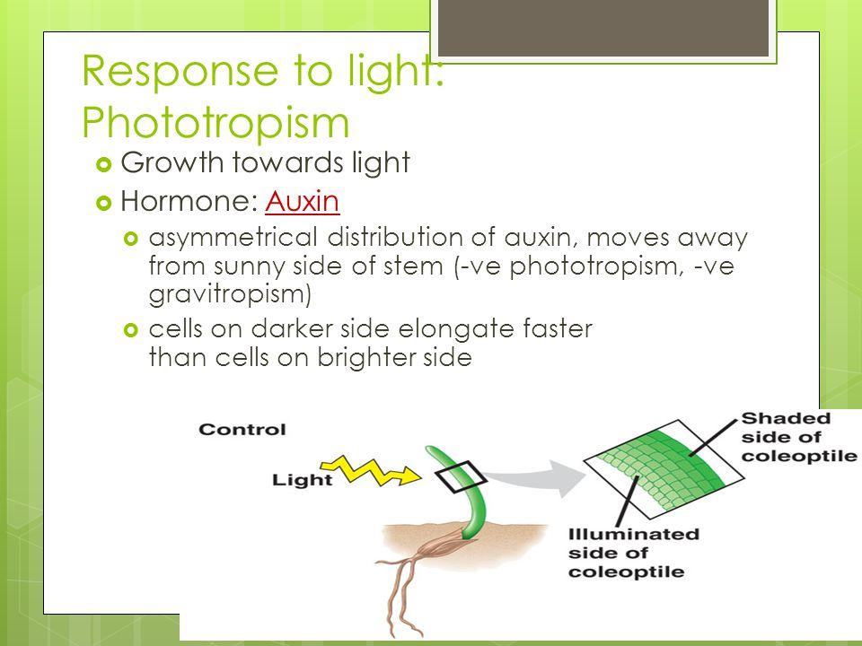 Response to light: Phototropism