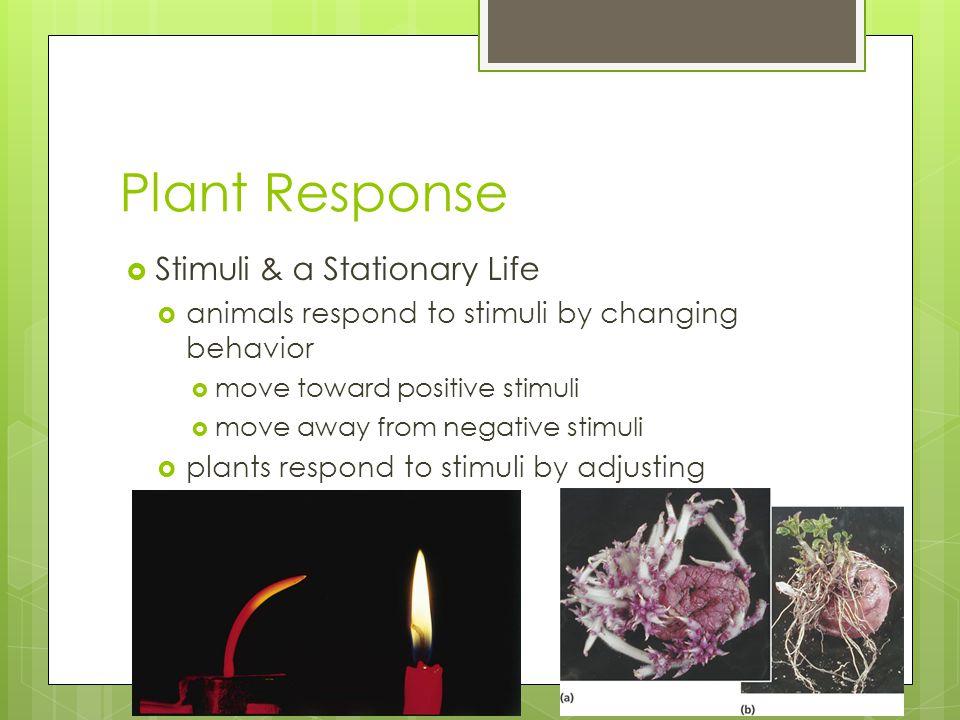 Plant Response Stimuli & a Stationary Life