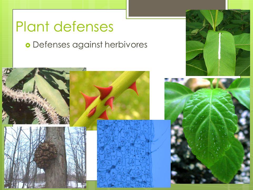 Plant defenses 2005-2006 Defenses against herbivores