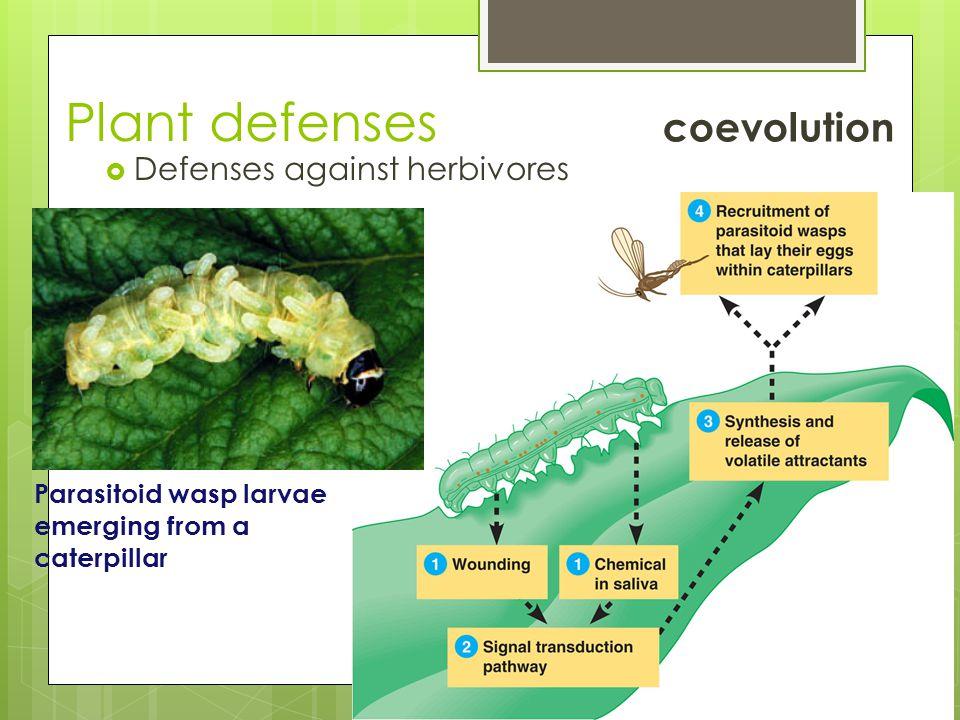 Plant defenses coevolution Defenses against herbivores
