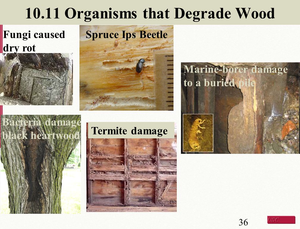 10.11 Organisms that Degrade Wood