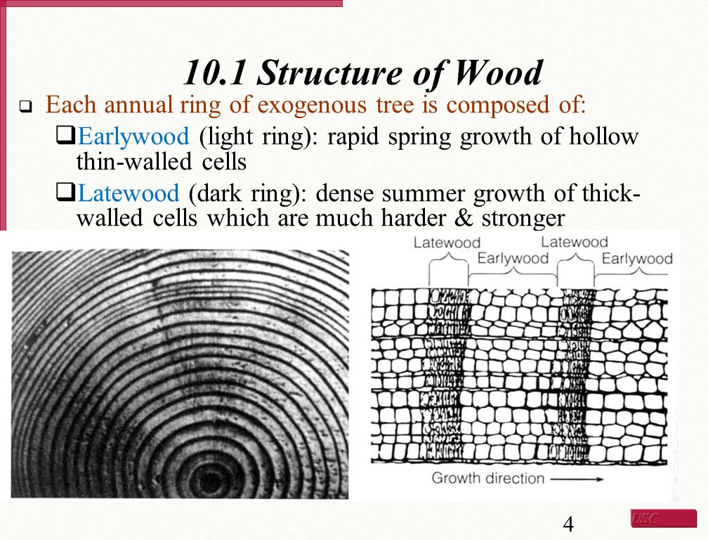 10.1 Structure of Wood Each annual ring of exogenous tree is composed of: Earlywood (light ring): rapid spring growth of hollow thin-walled cells.