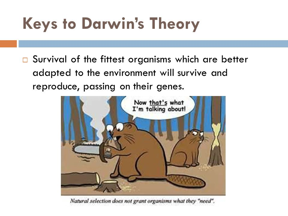 Keys to Darwin's Theory