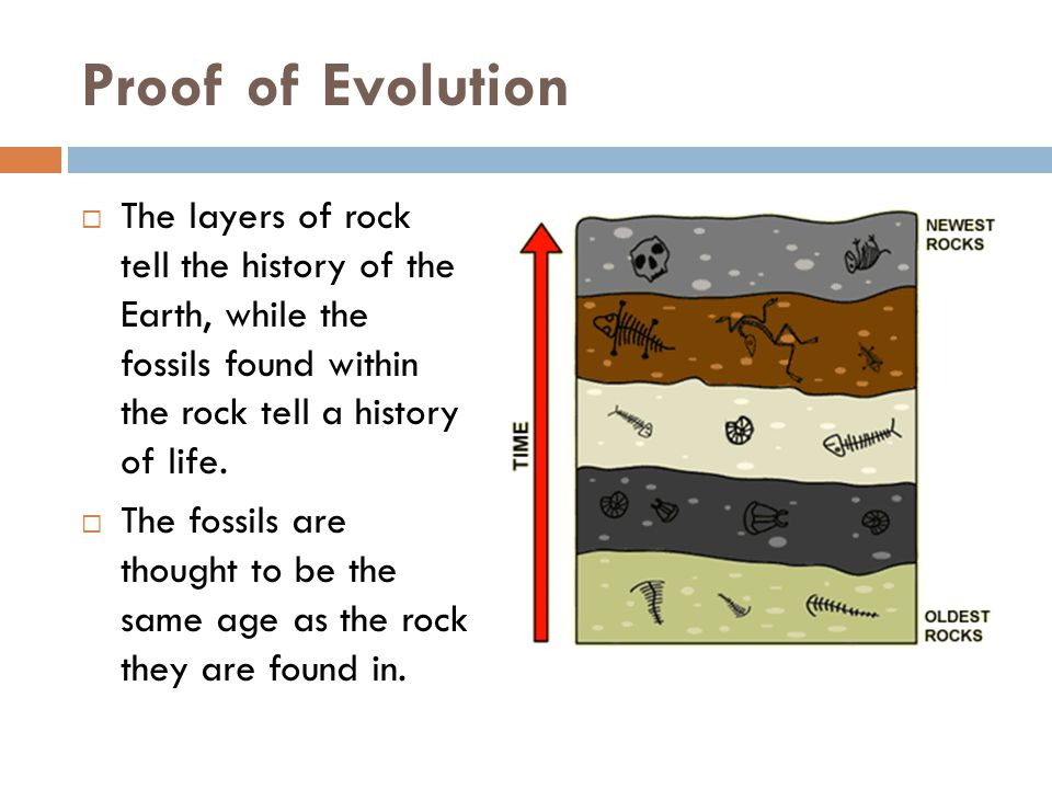 Proof of Evolution The layers of rock tell the history of the Earth, while the fossils found within the rock tell a history of life.
