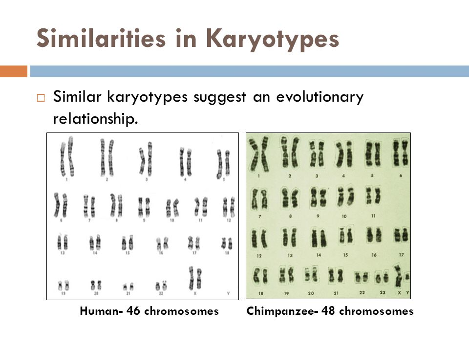 Similarities in Karyotypes