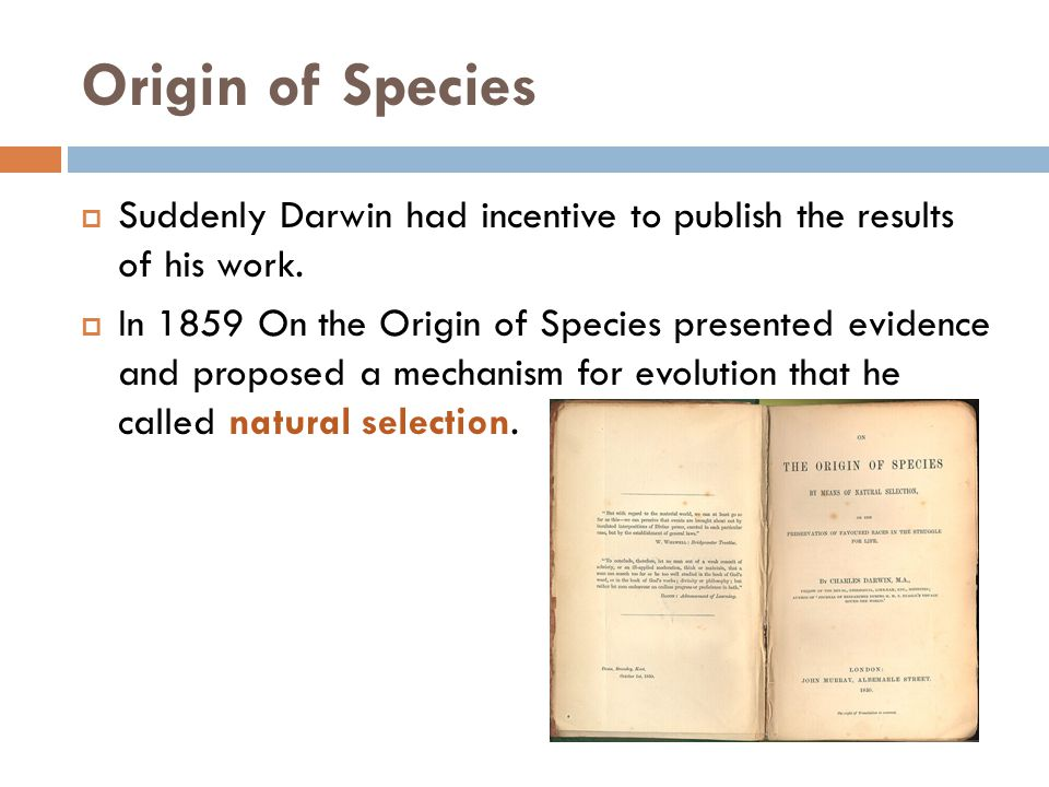 Origin of Species Suddenly Darwin had incentive to publish the results of his work.