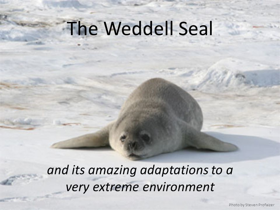 and its amazing adaptations to a very extreme environment