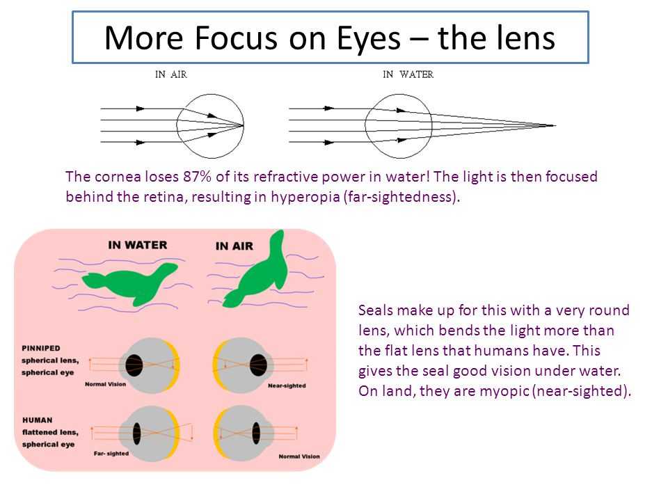 More Focus on Eyes – the lens