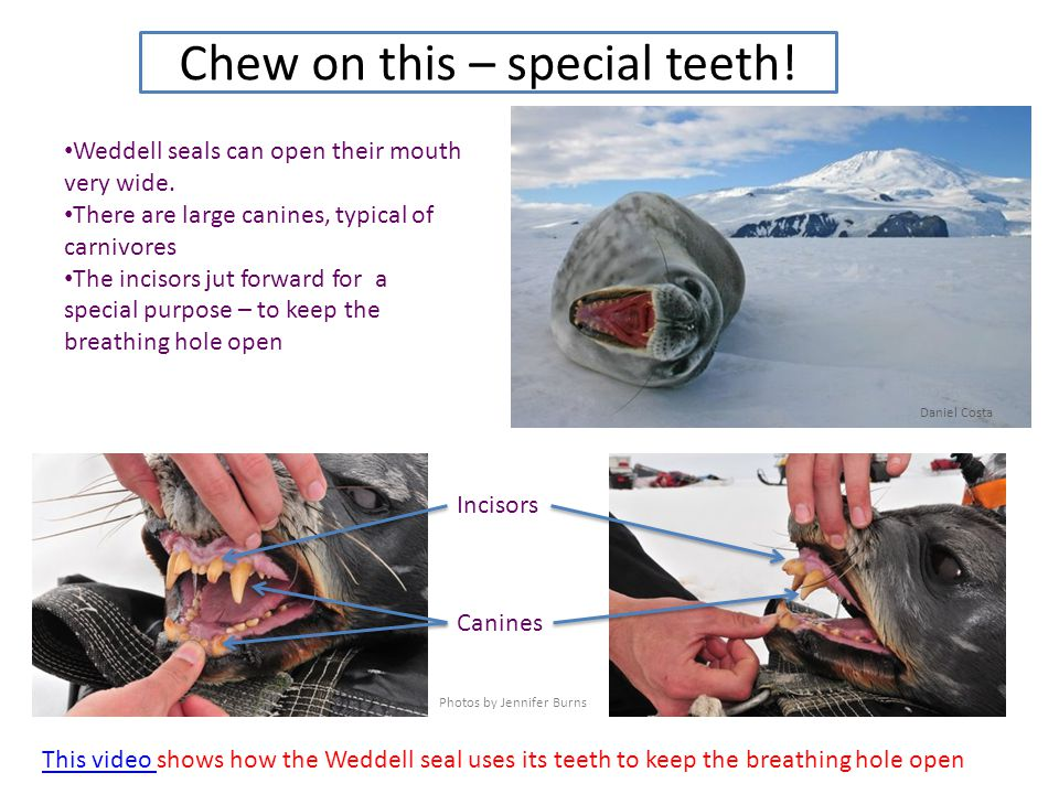 Chew on this – special teeth!