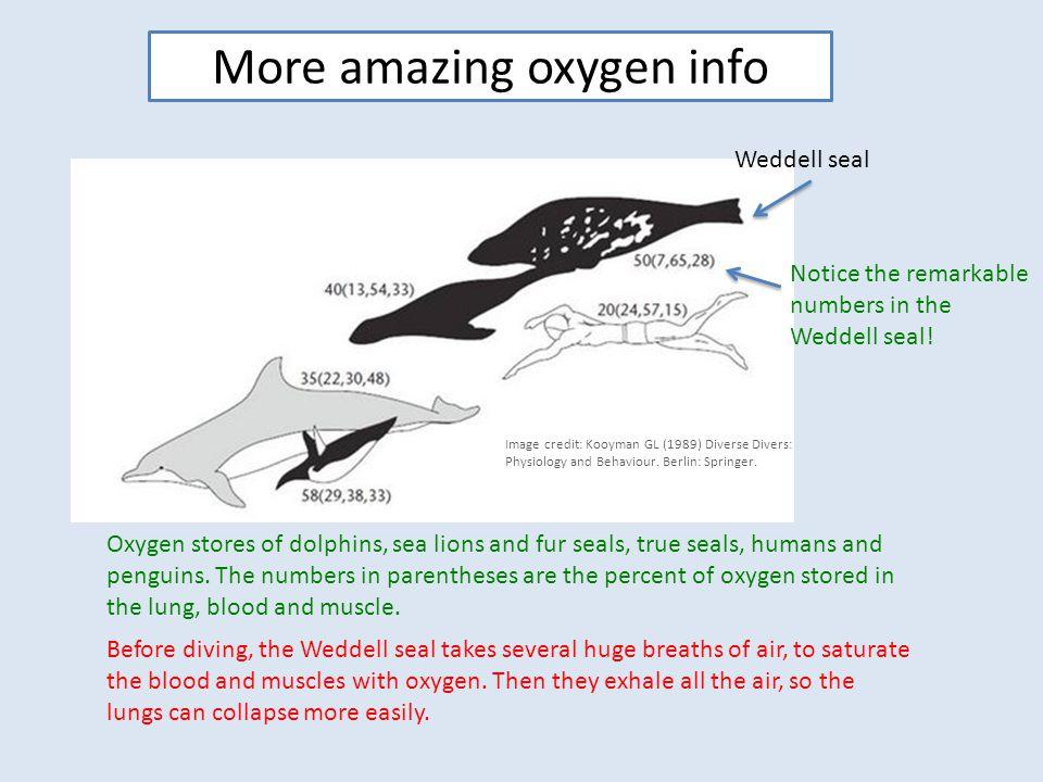 More amazing oxygen info