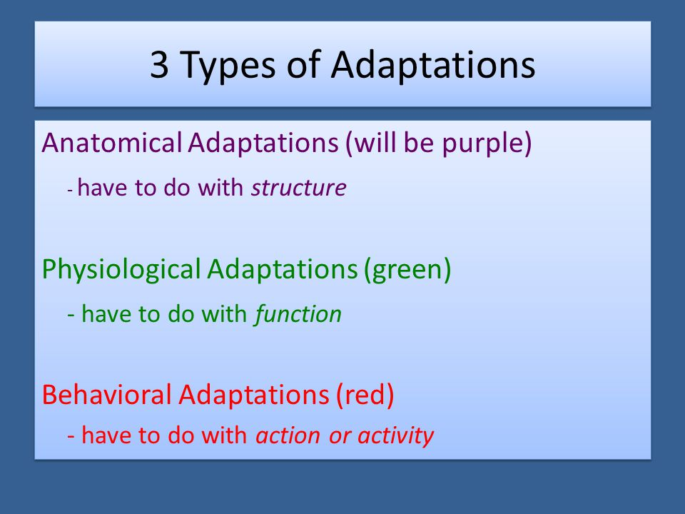 3 Types of Adaptations Anatomical Adaptations (will be purple)