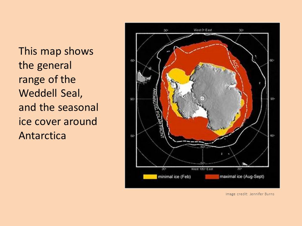 This map shows the general range of the Weddell Seal, and the seasonal ice cover around Antarctica