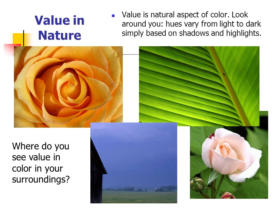 Value in Nature Where do you see value in color in your surroundings