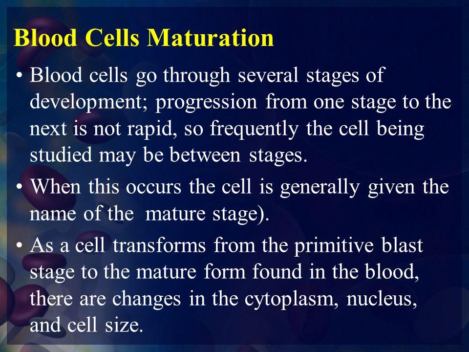 Blood Cells Maturation