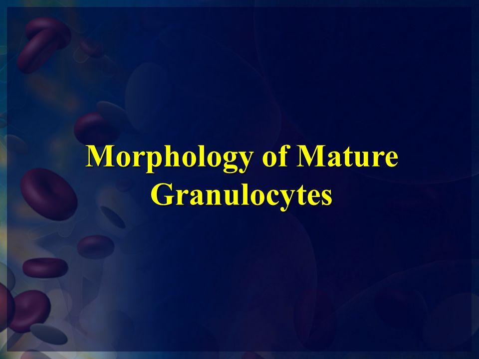 Morphology of Mature Granulocytes