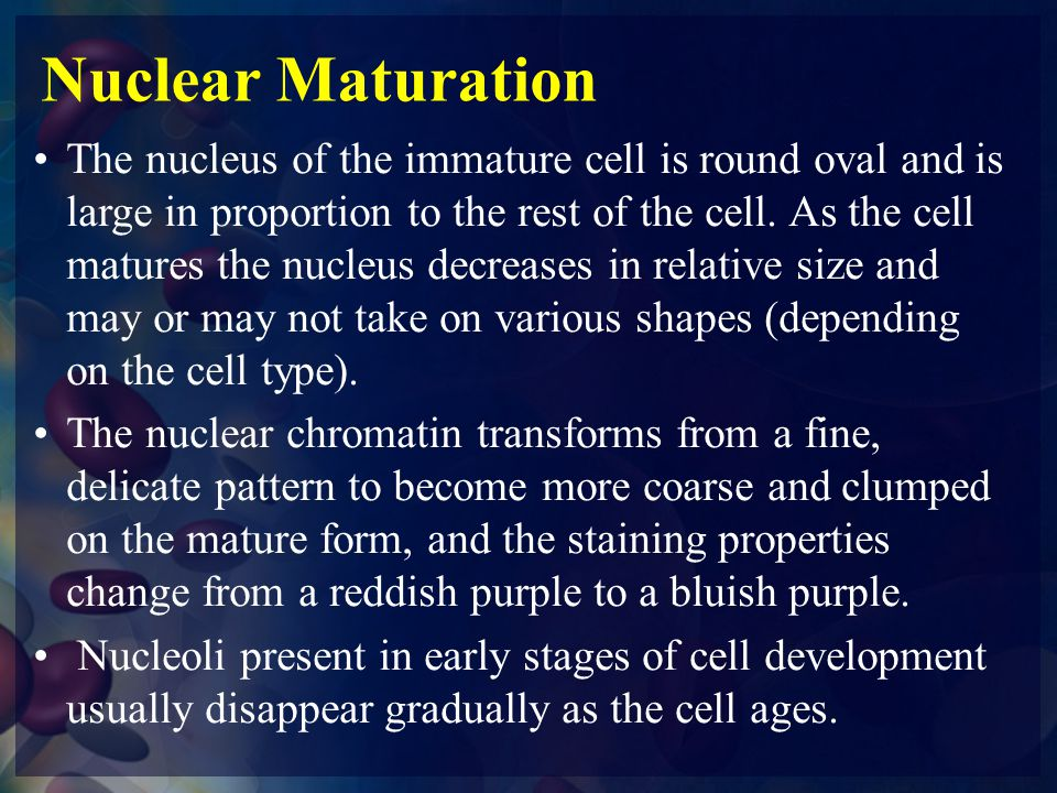 Nuclear Maturation