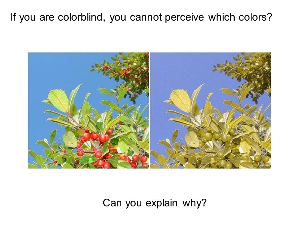 If you are colorblind, you cannot perceive which colors