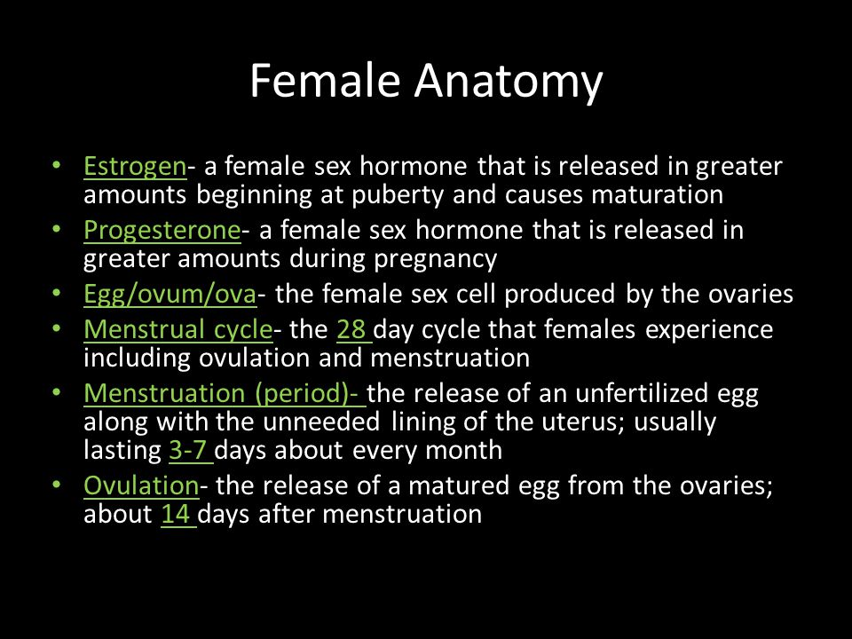 Female Anatomy Estrogen- a female sex hormone that is released in greater amounts beginning at puberty and causes maturation.