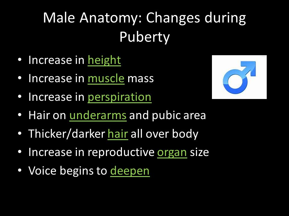Male Anatomy: Changes during Puberty