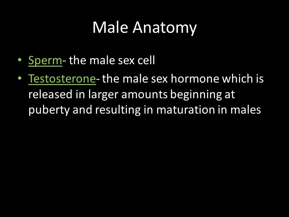 Male Anatomy Sperm- the male sex cell