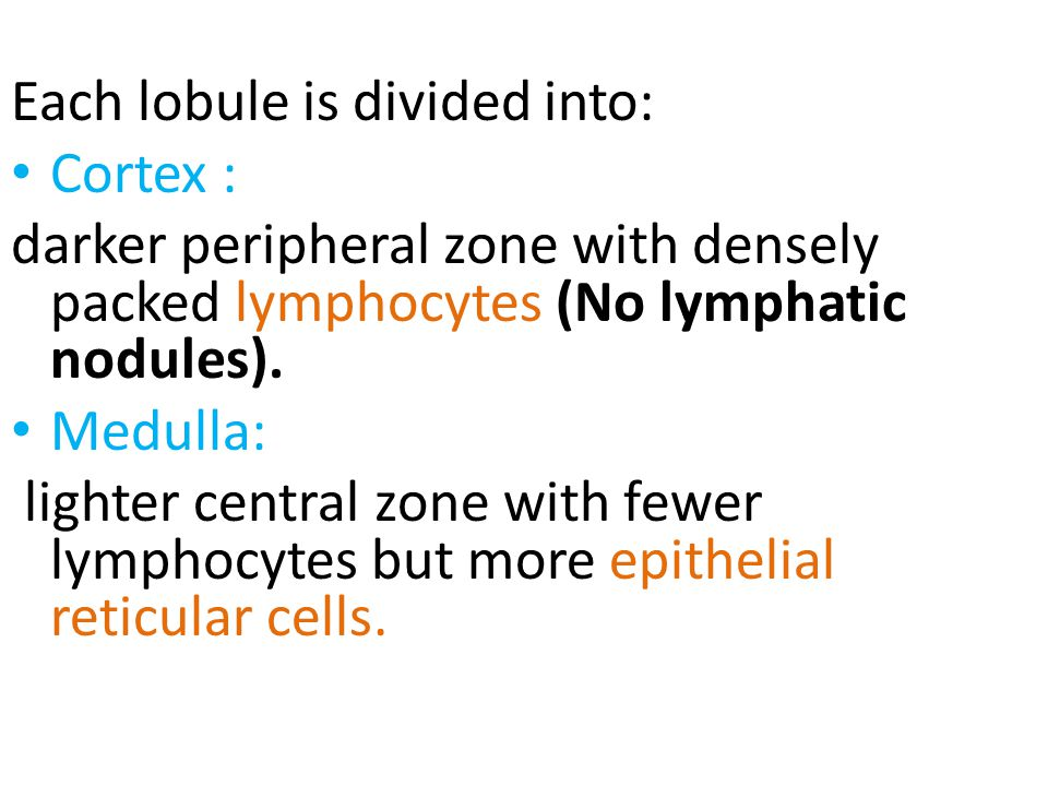 Each lobule is divided into:
