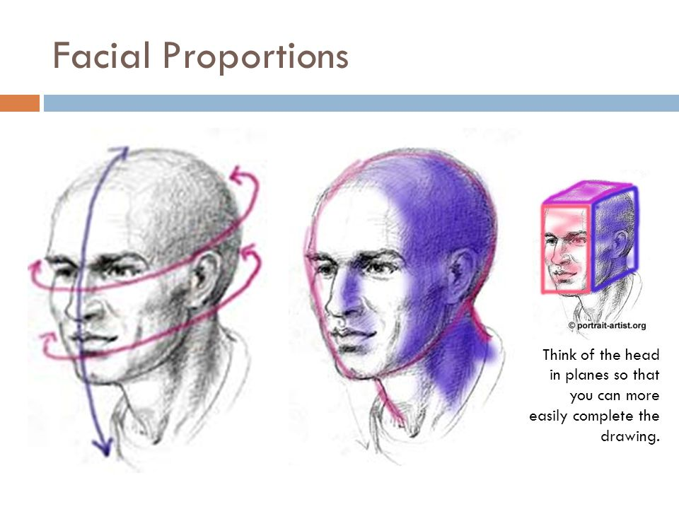 Facial Proportions Think of the head in planes so that you can more easily complete the drawing.
