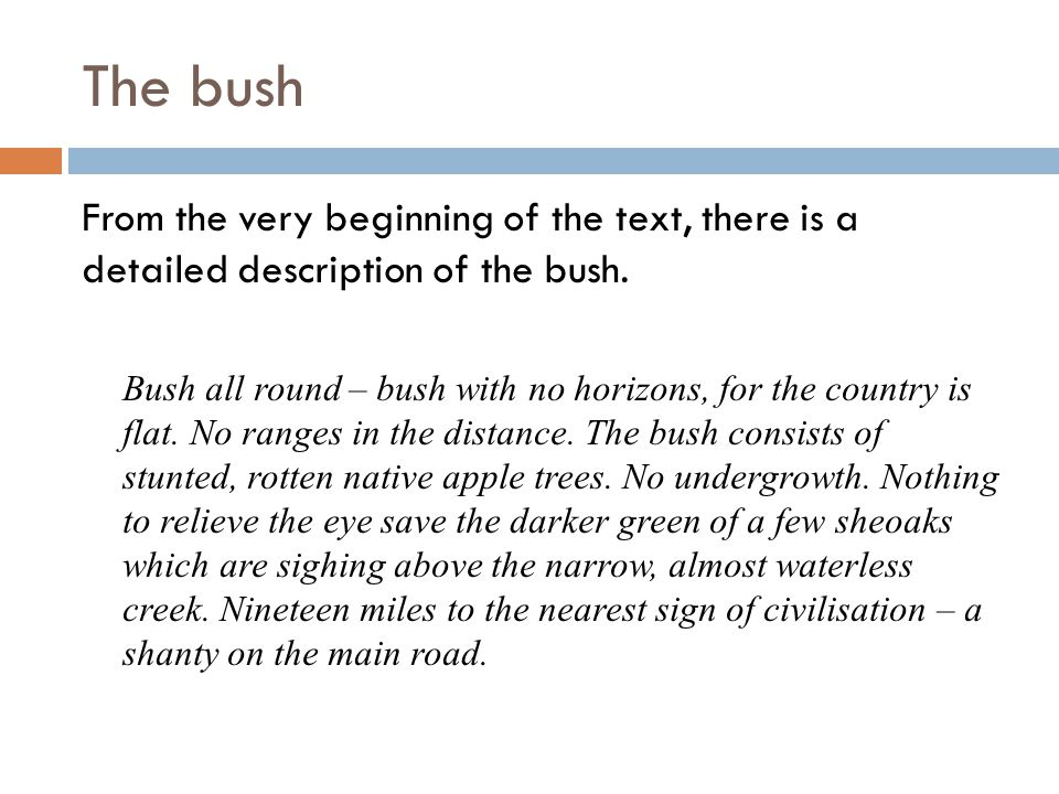 The bush From the very beginning of the text, there is a detailed description of the bush.