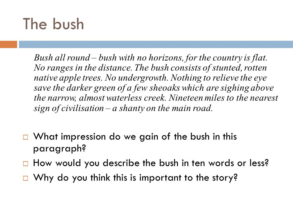 The bush What impression do we gain of the bush in this paragraph