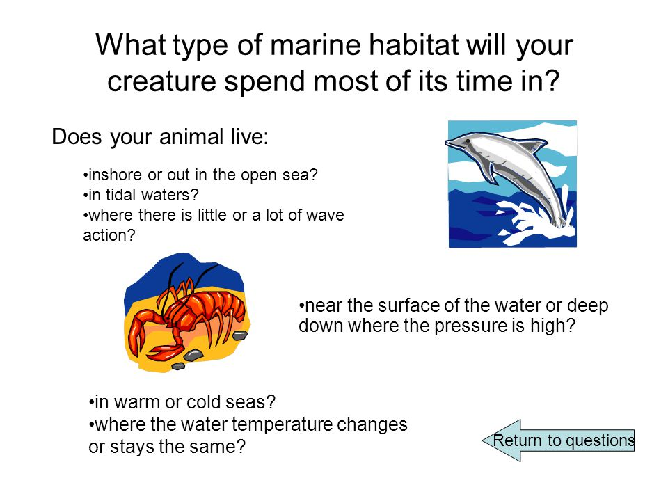 What type of marine habitat will your creature spend most of its time in