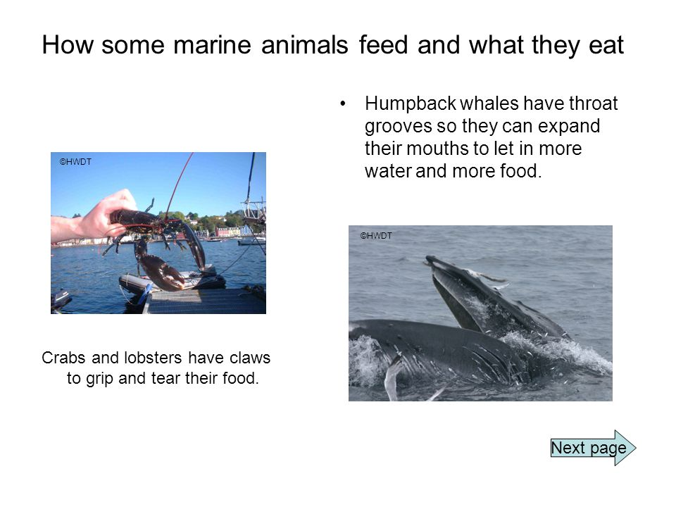 How some marine animals feed and what they eat