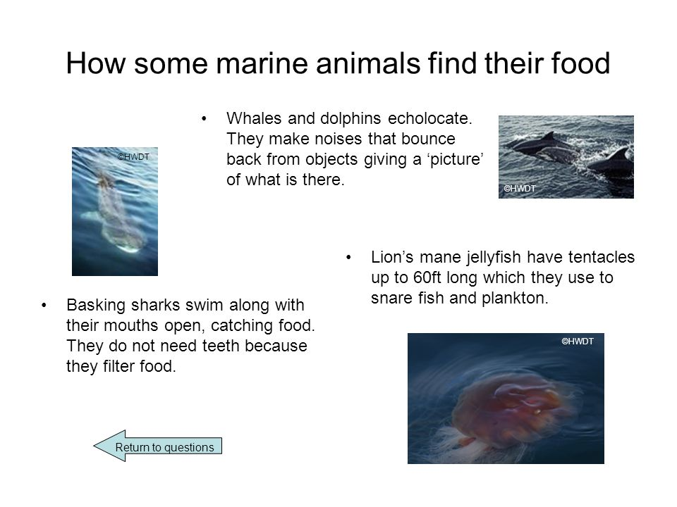 How some marine animals find their food