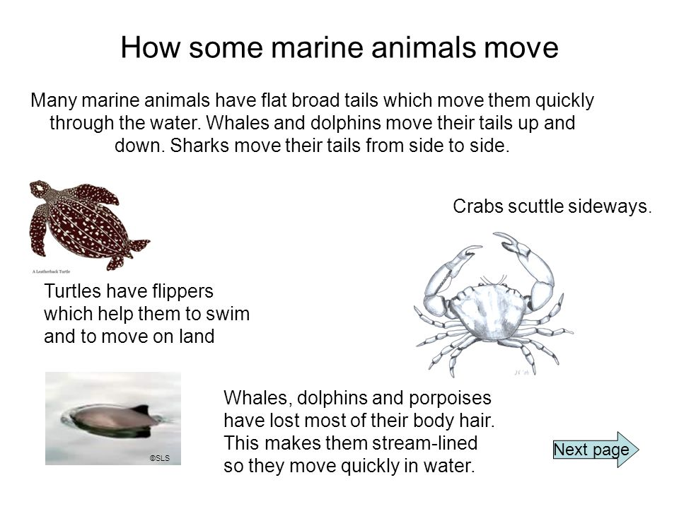 How some marine animals move