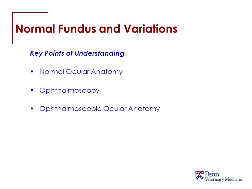 Normal Fundus and Variations