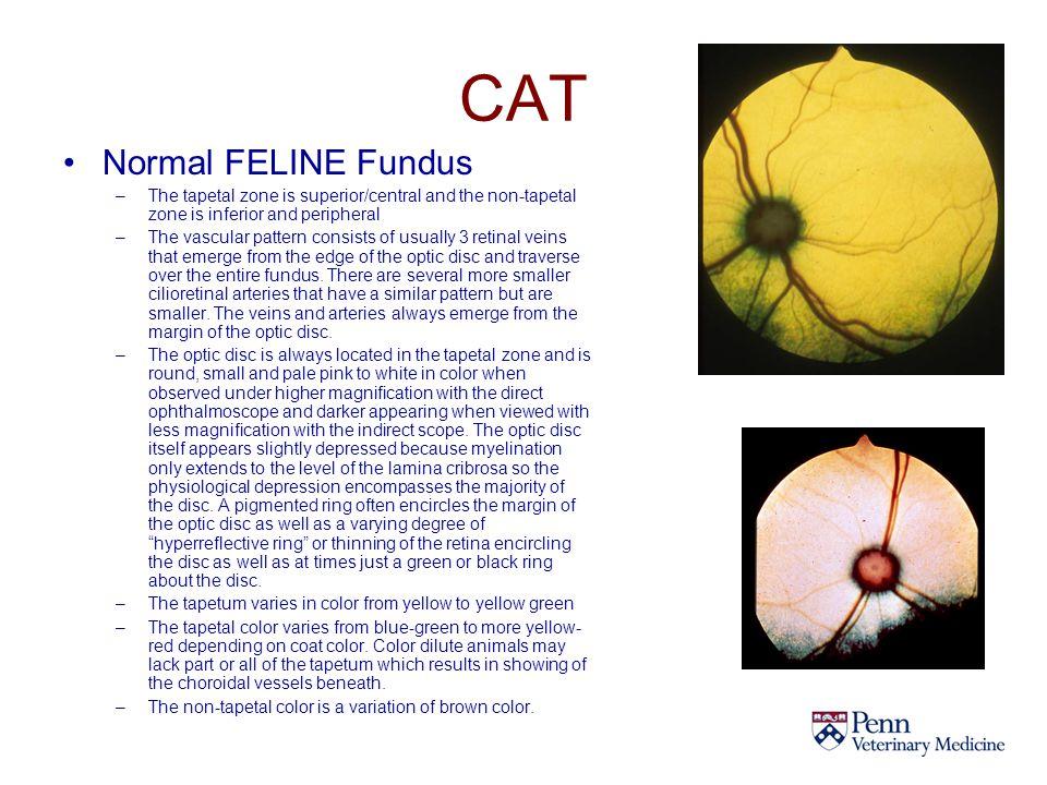 CAT Normal FELINE Fundus