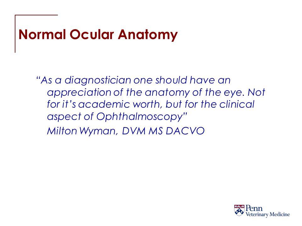 Normal Ocular Anatomy