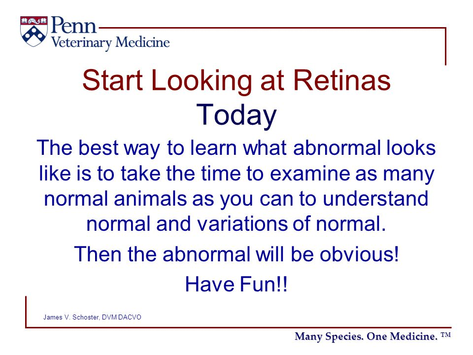 Start Looking at Retinas Today