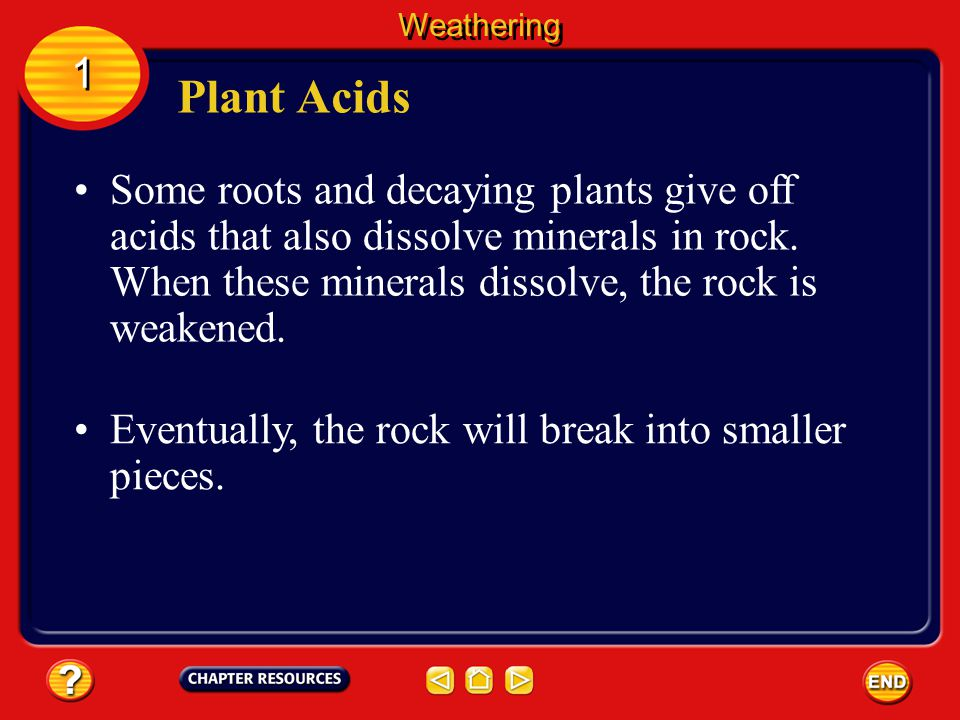Weathering 1. Plant Acids.