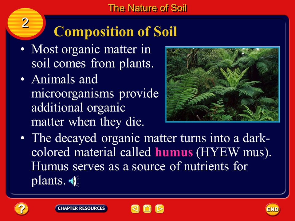 Composition of Soil 2 Most organic matter in soil comes from plants.
