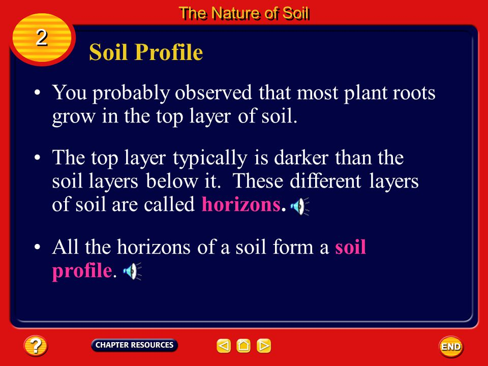 The Nature of Soil 2. Soil Profile. You probably observed that most plant roots grow in the top layer of soil.