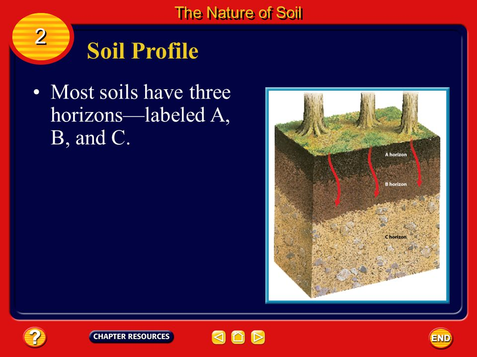 Soil Profile 2 Most soils have three horizons—labeled A, B, and C.