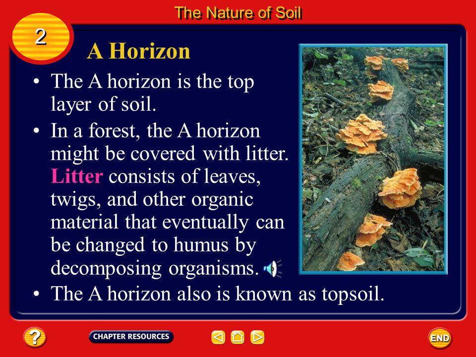 A Horizon 2 The A horizon is the top layer of soil.