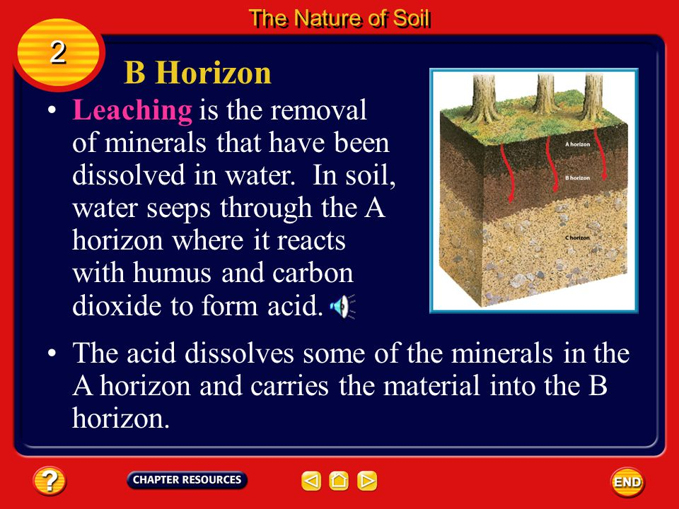 The Nature of Soil 2. B Horizon.