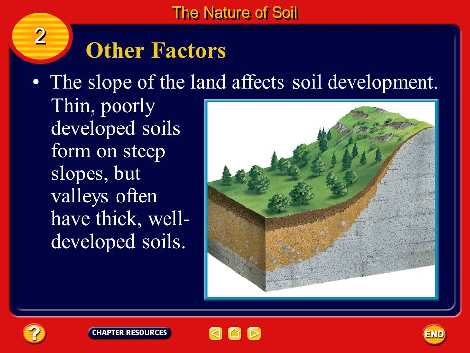 Other Factors 2 The slope of the land affects soil development.