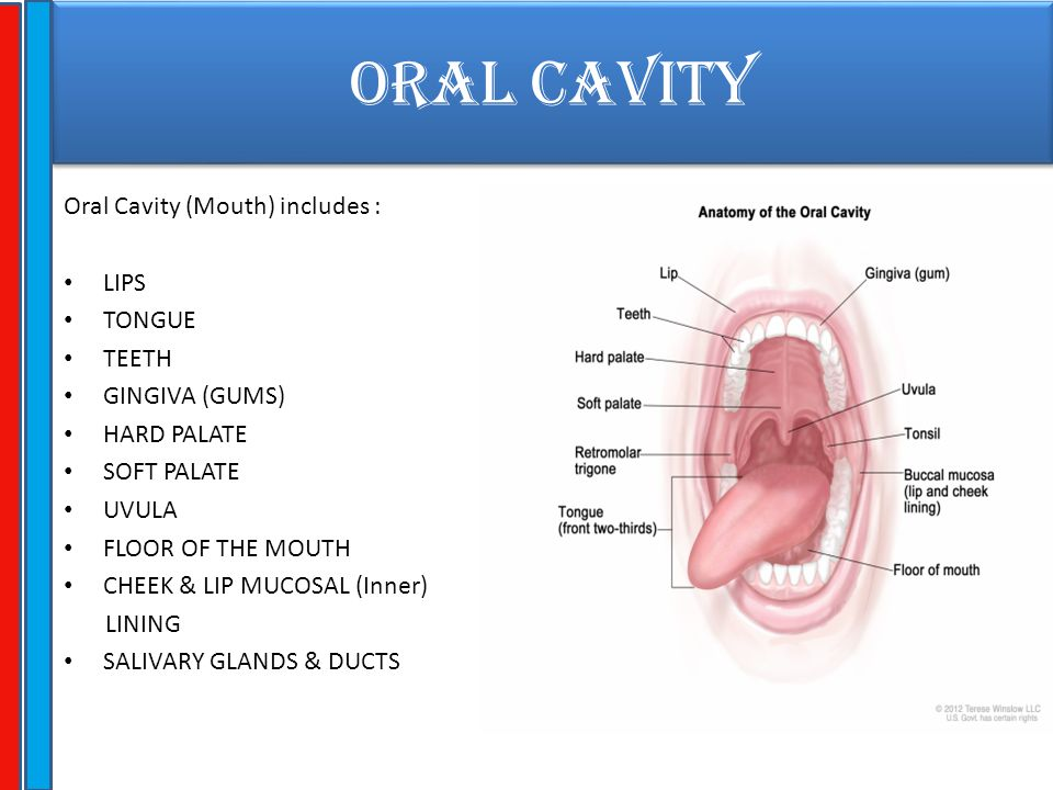 ORAL CAVITY Oral Cavity (Mouth) includes : LIPS TONGUE TEETH