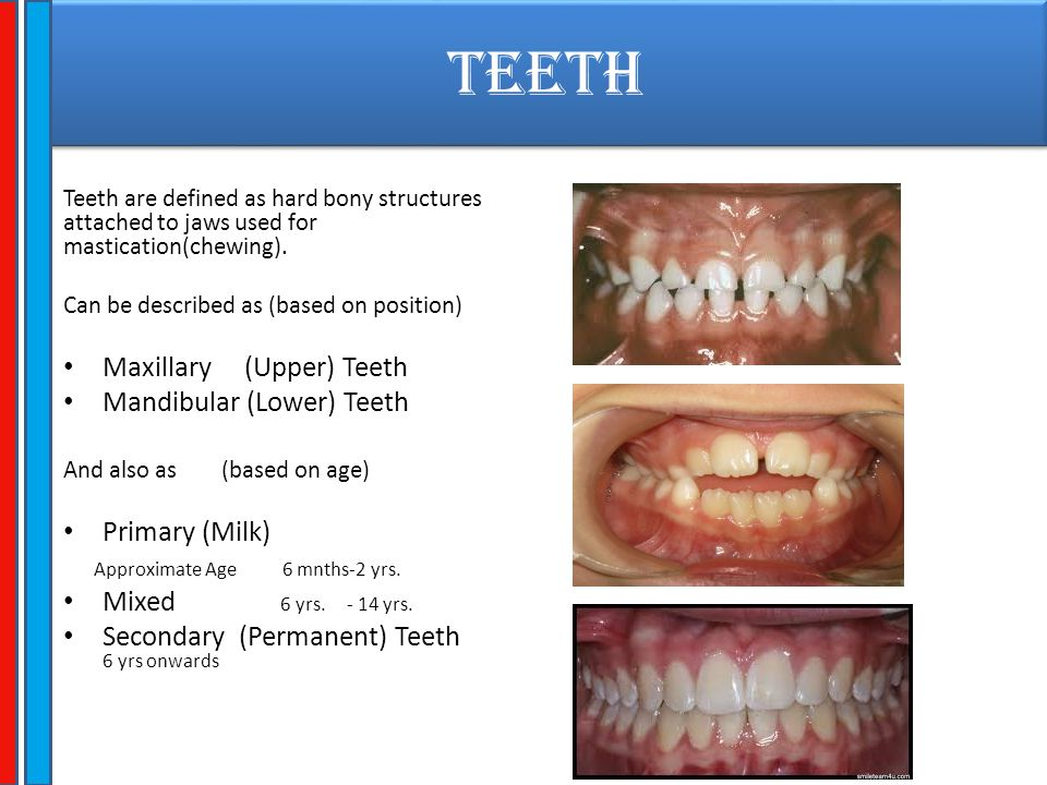 TEETH Maxillary (Upper) Teeth Mandibular (Lower) Teeth Primary (Milk)