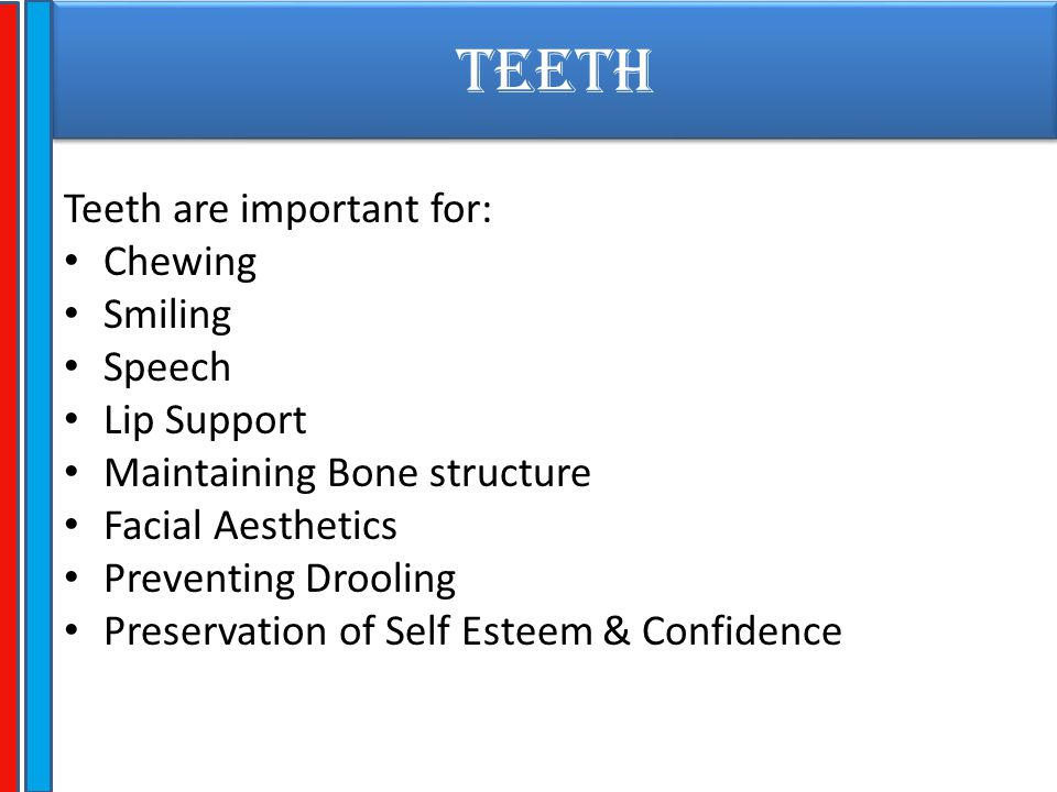 TEETH Teeth are important for: Chewing Smiling Speech Lip Support