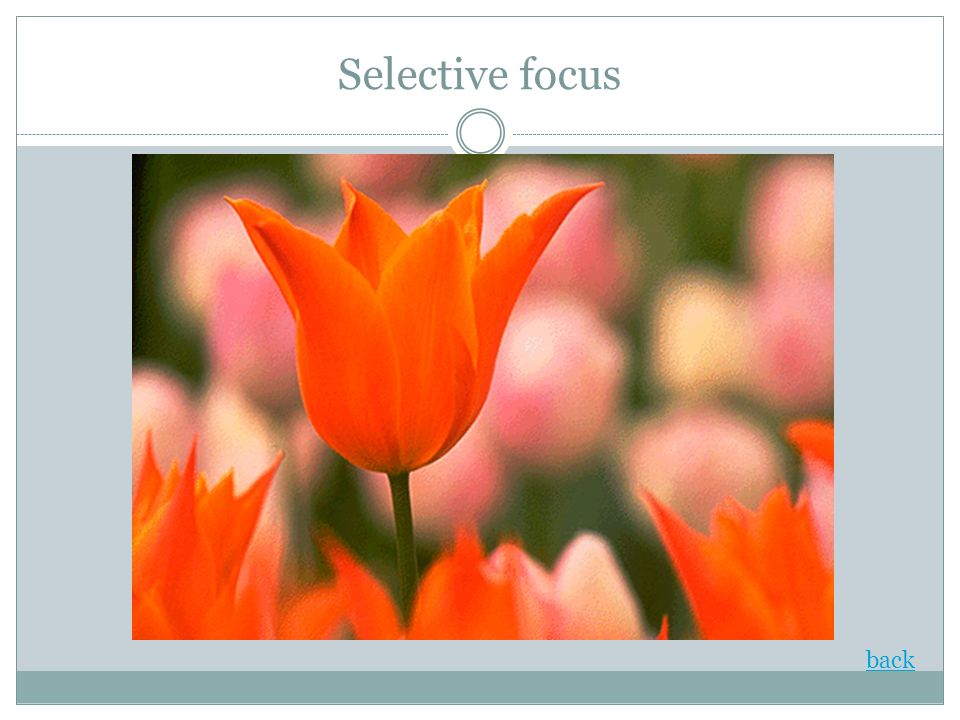 Selective focus back
