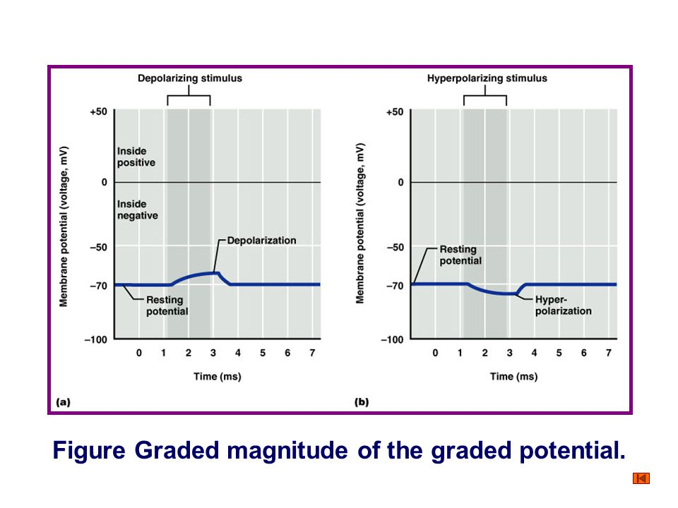 Figure Graded magnitude of the graded potential.