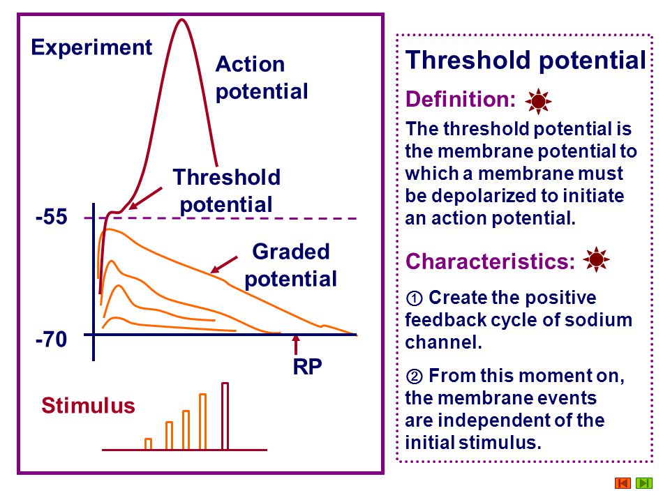 Threshold potential Experiment Action potential Definition:
